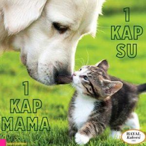 Hayvanları Koruyalım